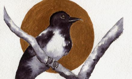 Postkarte: Nebelkrähe / Postcard: Hooded Crow