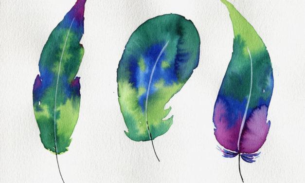 Federn/ Feathers