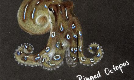 Black Sketchbook: Octopus #5