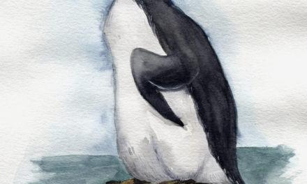 Aquarell: Riesenalk/ Watercolor Painting: Great Auk
