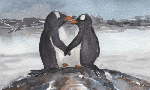 Pinguine/ Penguins