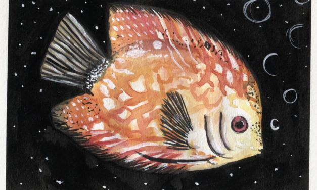 Diskusfisch/ Discus Fish
