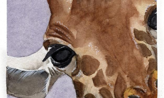 Bedrohte Tierarten: Giraffe/ Endangered Species: Giraffes