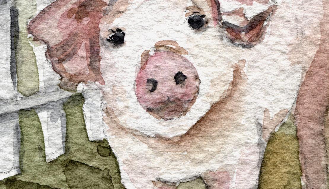 Aquarell: Ferkel / Watercolor Painting: Piglet