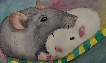 Müde Ratten/ Sleepy Rats