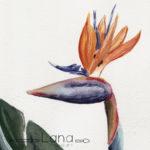 Review des Sennelier l'Aquarelle Reisesets